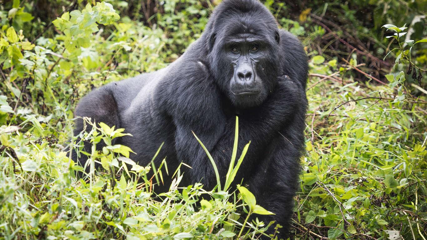 Grand tour de l'Ouganda