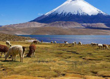 Sur les routes des hauts plateaux chiliens : Chungara & Atacama