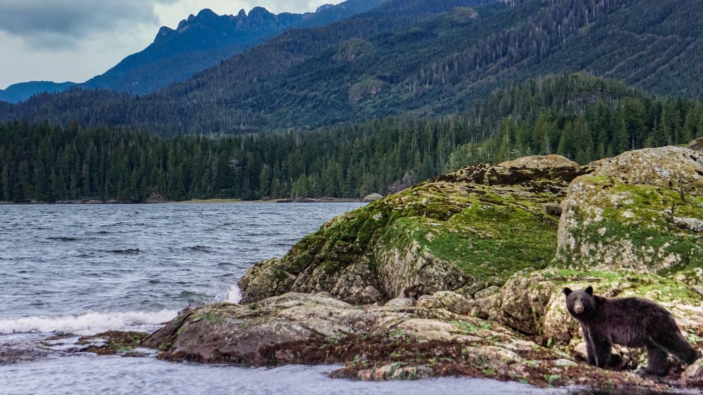 Ile de Vancouver : découverte de la faune et de la nature sauvage