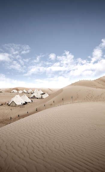 Le paradoxe merveilleux d'un désert plein de vie