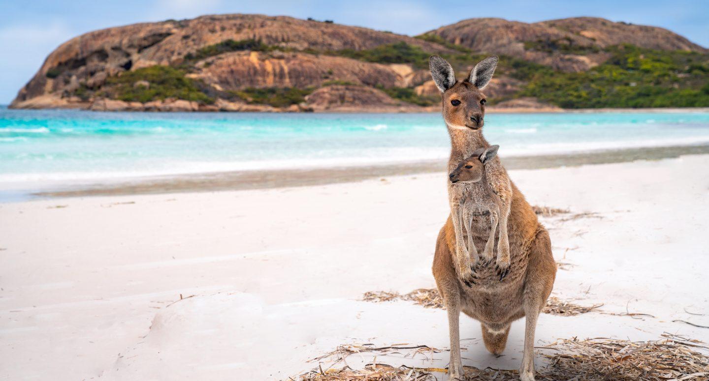 Voyage à Kangaroo Island