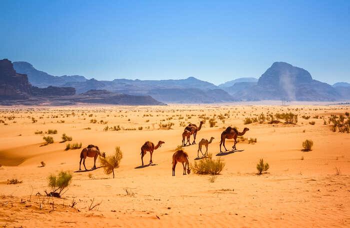 Pourquoi un voyage en Orient avec Cercle des Voyages ?