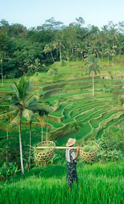 Climat indonésien