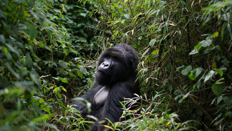 Voyage au Rwanda, le pays aux 1000 collines