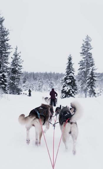 Guide Voyage Finlande