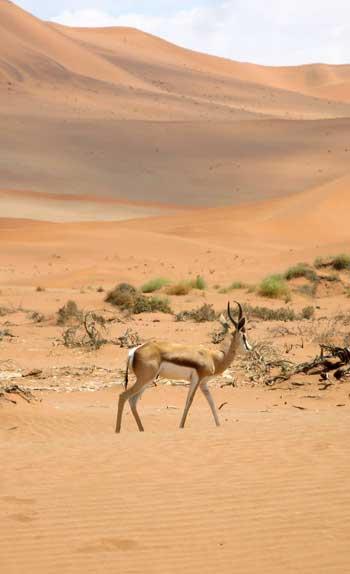 Guide Voyage Namibie