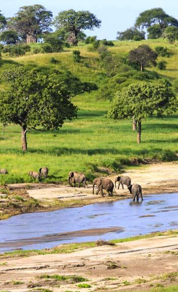 Guide Voyage Tanzanie