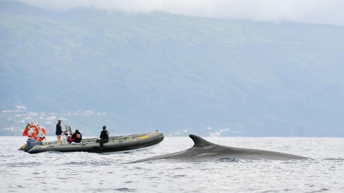 Pourquoi un voyage aux Açores avec Cercle des Voyages ?