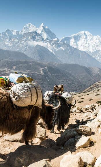 Entre le Mont Everest et les réserves de l'Helambu