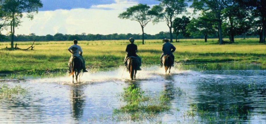 Safari au Pantatal