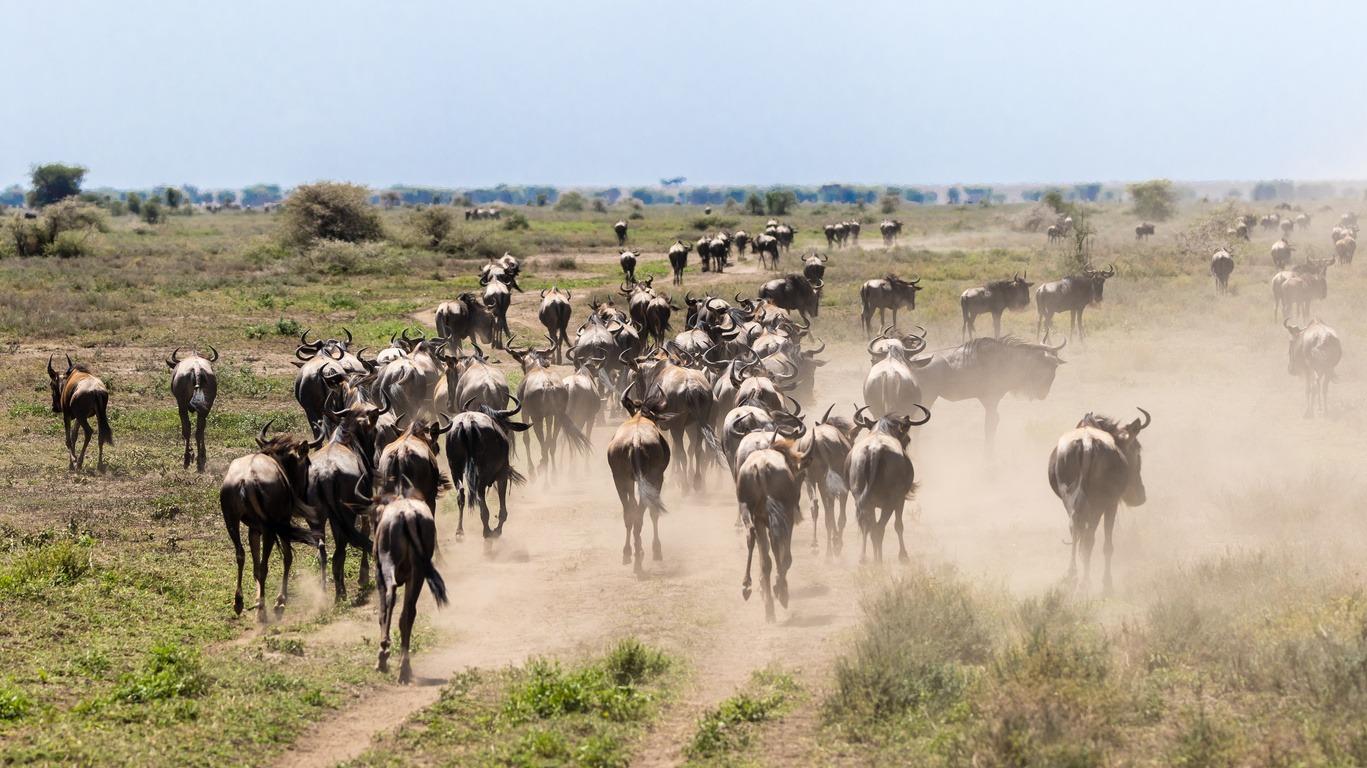 Voyage dans le Parc du Serengeti