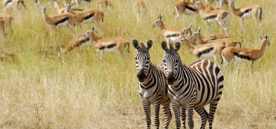 Réserve du Masai-Mara