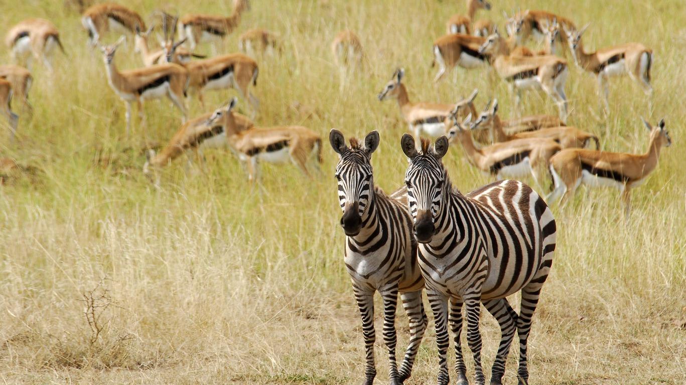 Voyages dans la réserve du Masai Mara