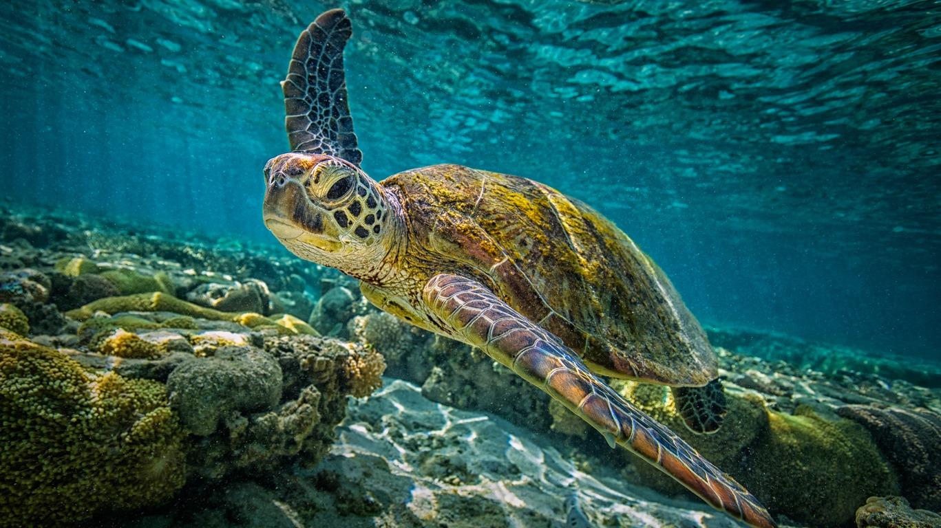 Voyage dans la Grande Barrière de Corail