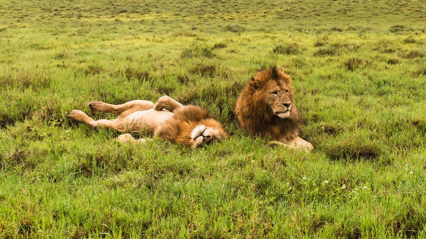 Voyage au Parc d'Amboseli