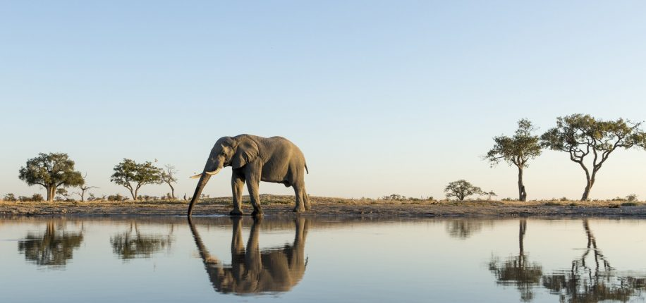 Parc de Chobe