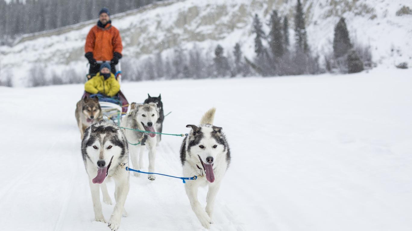 Traîneau à chiens au Canada