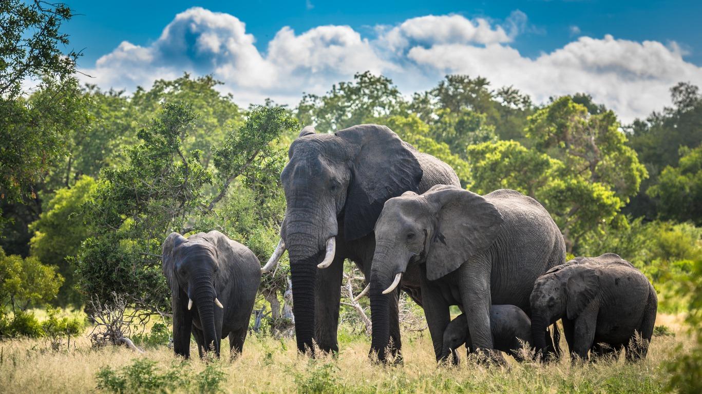 Safaris en Afrique du Sud