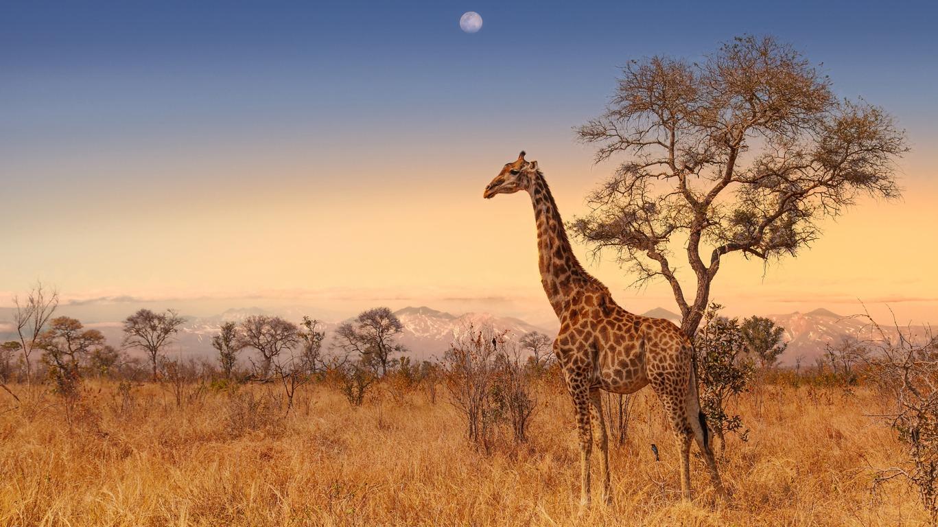 Voyage au Parc Kruger