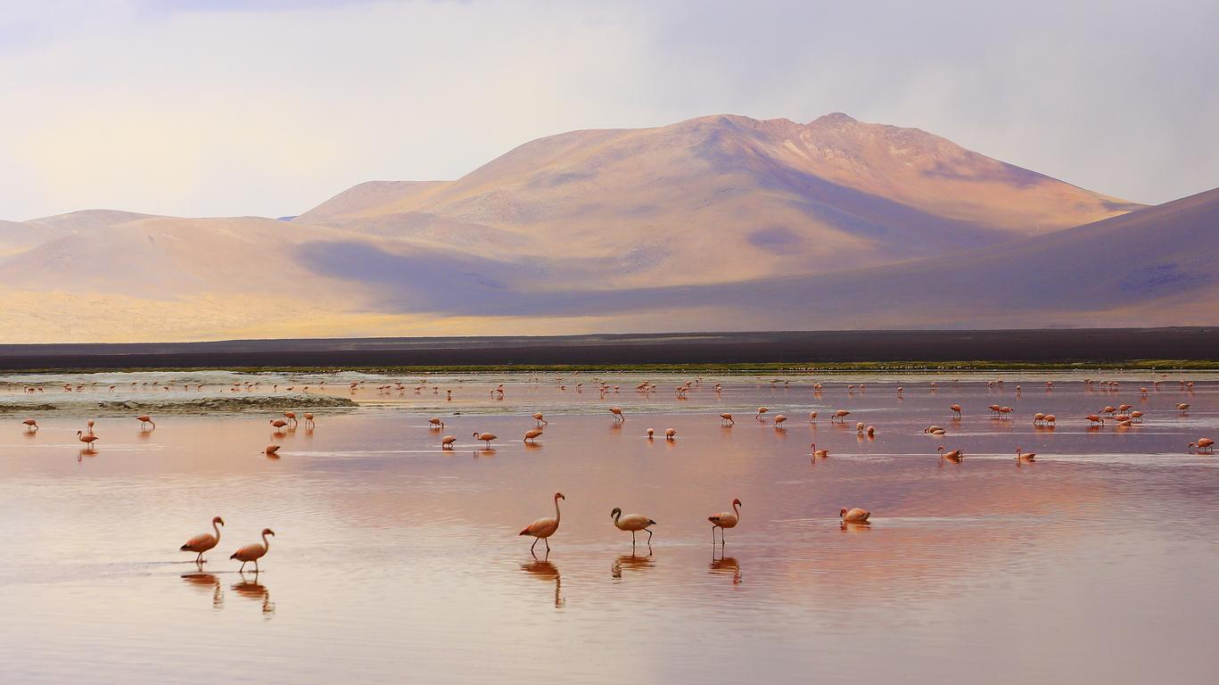 Voyage dans le Lipez bolivien