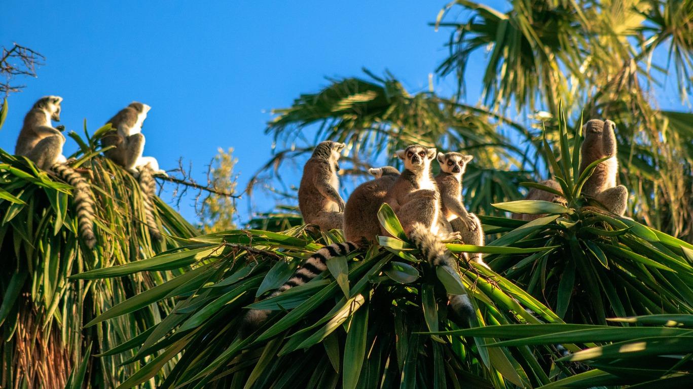Voyages dans l'Ouest de Madagascar