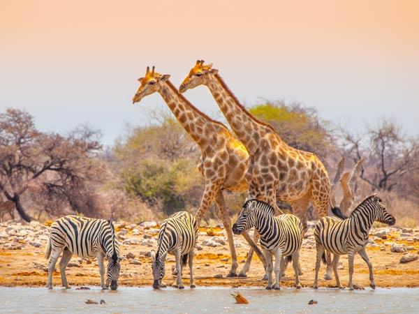 Quels pays choisir pour votre voyage en Afrique ?
