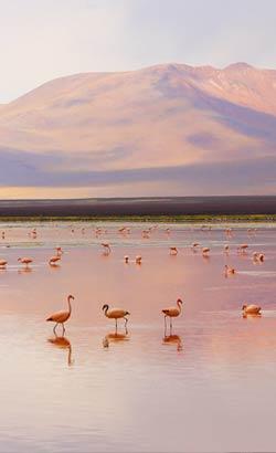 Zones naturelles en Bolivie