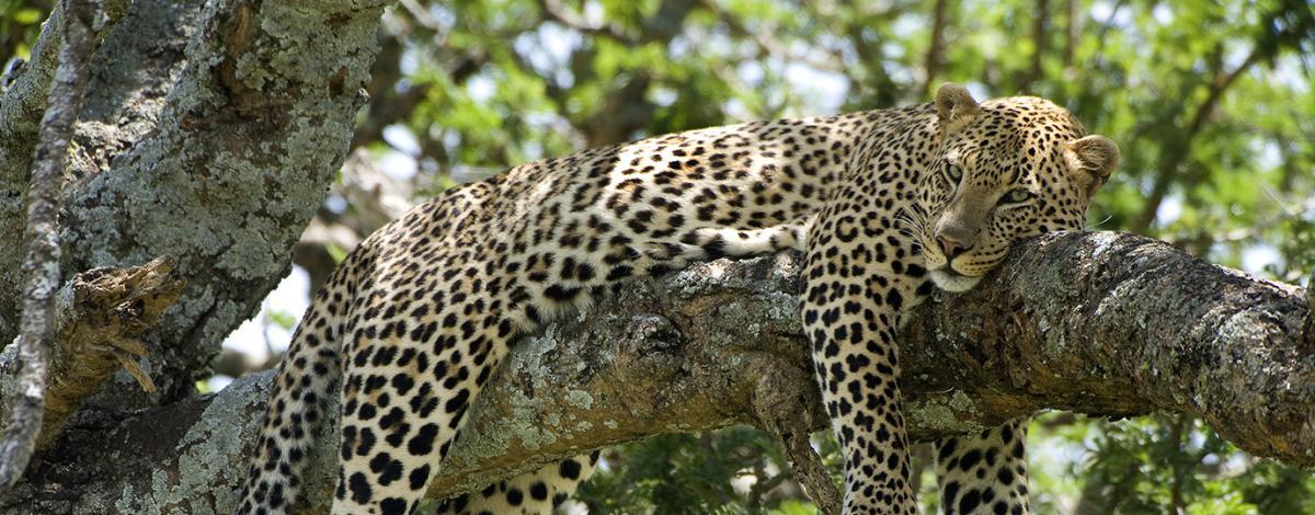 Sur la piste des Big Five en Afrique du Sud : Parc Kruger et Canyon de la Blyde River