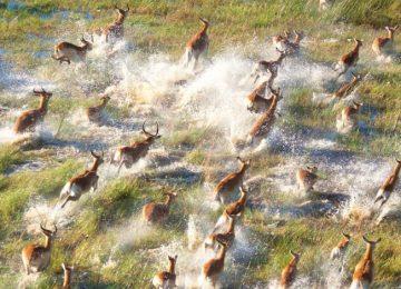 Safari au Botswana et Chutes Victoria : Chobe et Delta de l'Okavango