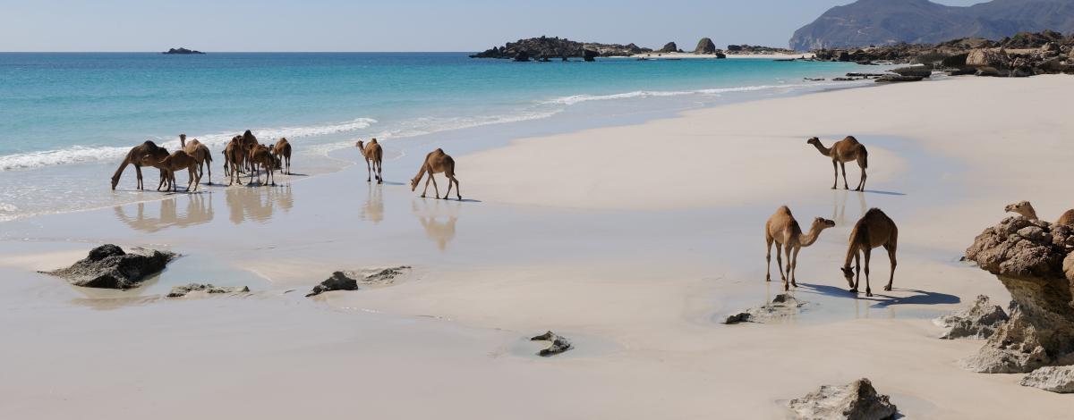 Voyage itinérant dans le Sultanat d'Oman et plages de Salalah – en hôtels de luxe