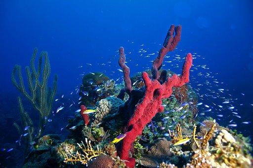 Plongée aux Bahamas : Séjour à Long Island et Andros Island