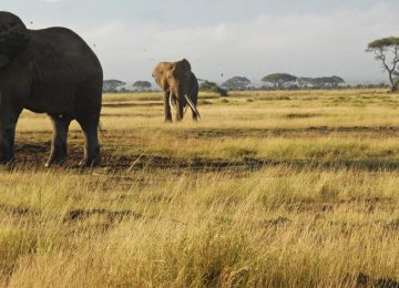 Safari dans les 4 grands parcs du Kenya et Océan Indien
