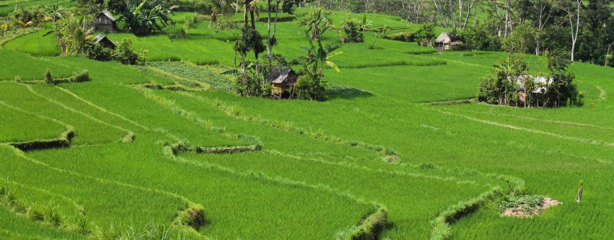 L'essentiel de Bali