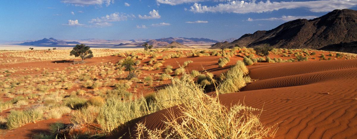 Trilogie Australe : Namibie, Botswana et Chutes Victoria