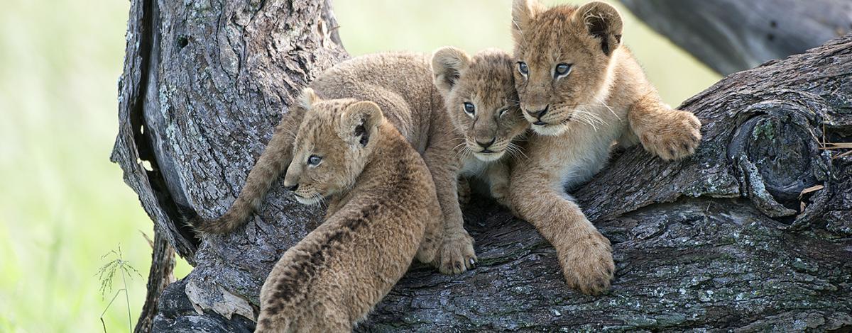 100% Safari au Kenya