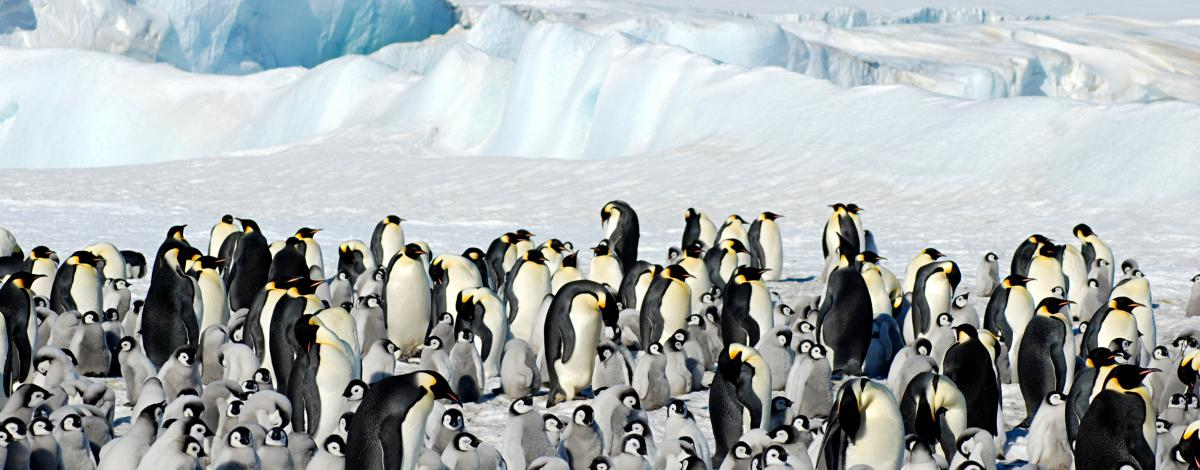 Découverte du 7ème continent : l'Antarctique