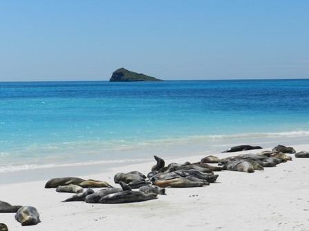 Les Galapagos d'île en île
