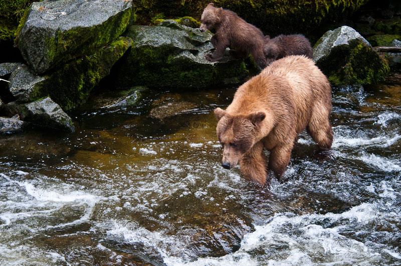 Voyage en Alaska à la rencontre des ours