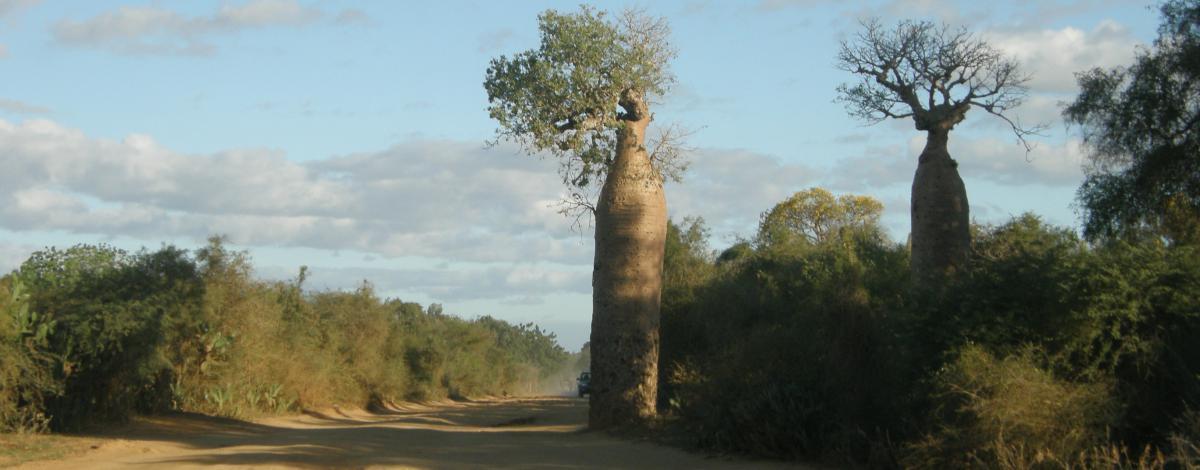 Premiers pas à Madagascar