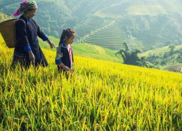 Nord Vietnam : Montagnes, rizières et minorités ethniques