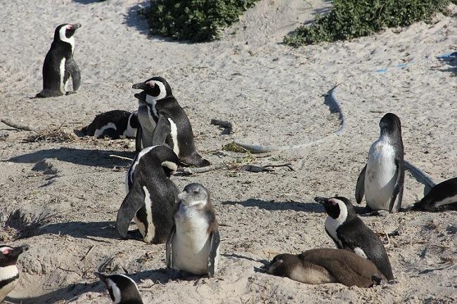 Du Cap au Drakensberg : l'Afrique du Sud, grandeur nature