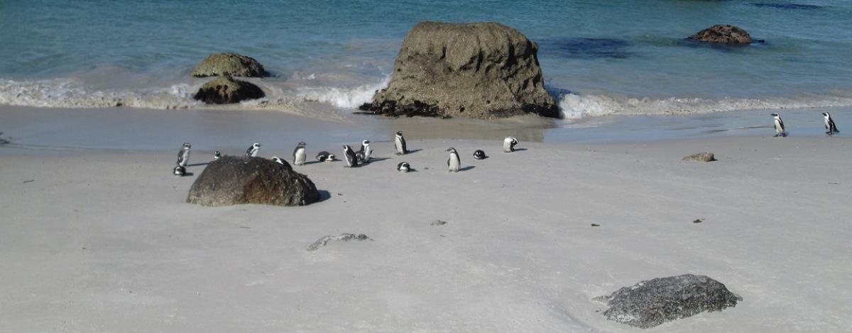 Voyage en Afrique du Sud en famille – Le Cap et la Route des Jardins