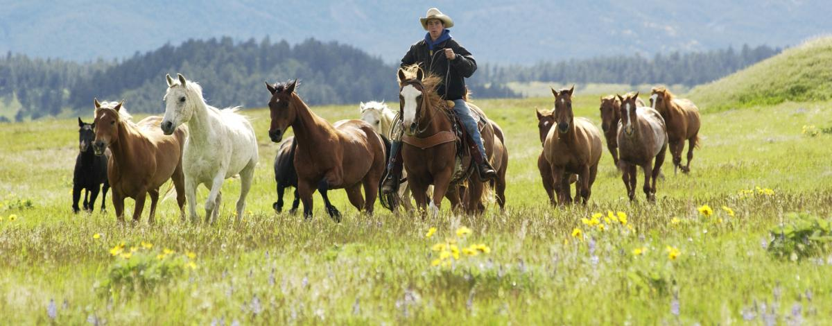 Le Wyoming en famille : Yellowstone et Grand Teton en ranch