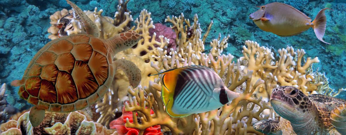 Combiné 5 iles spécial plongée : Tahiti – Moorea – Bora Bora – Rangiroa – Fakarava