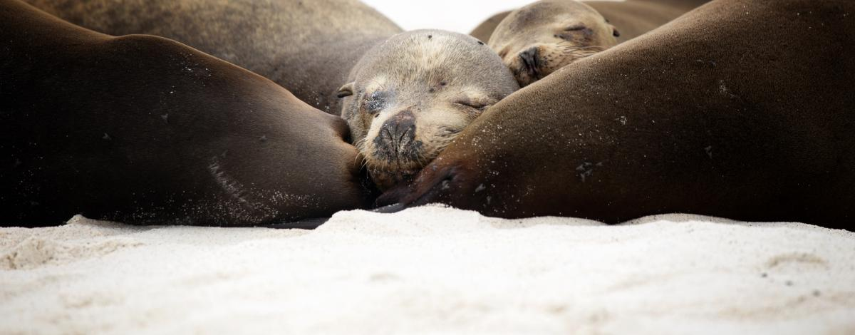 Voyage aux Galapagos avec vos enfants
