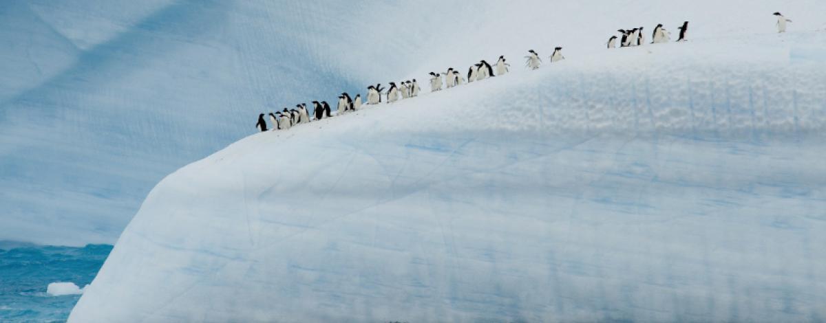L'Antarctique, le « Continent Blanc » à bord du Ponant