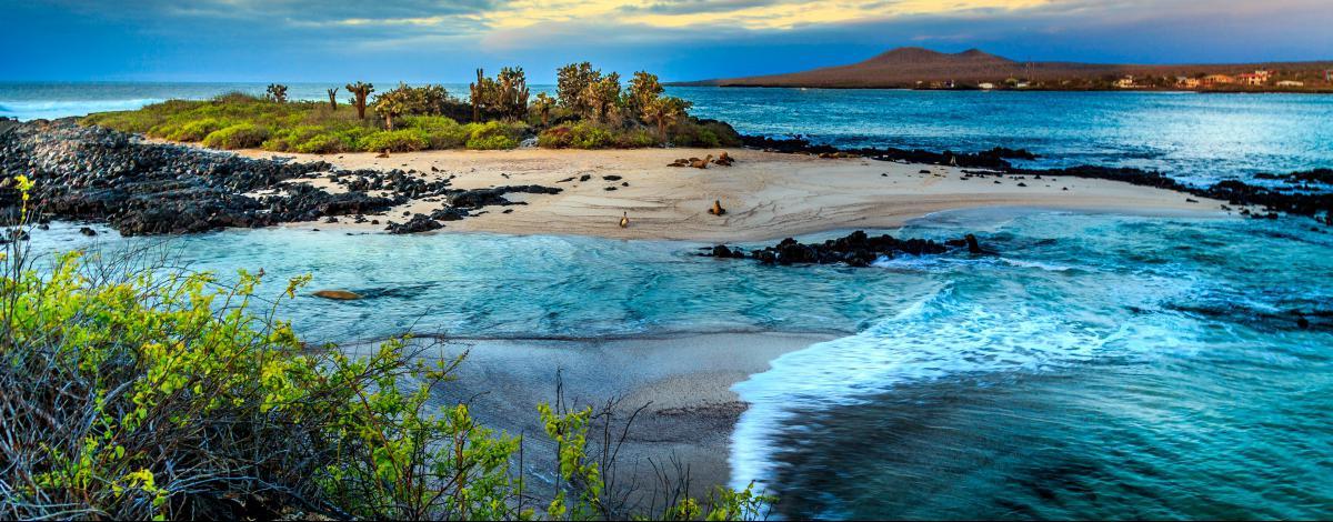 Les charmes de l'Equateur et croisière aux Galapagos