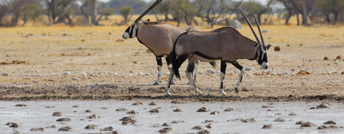 Safari au Botswana et Chutes Victoria : Chobe, Moremi, Delta de L'Okavango et Makgadikgadi pans