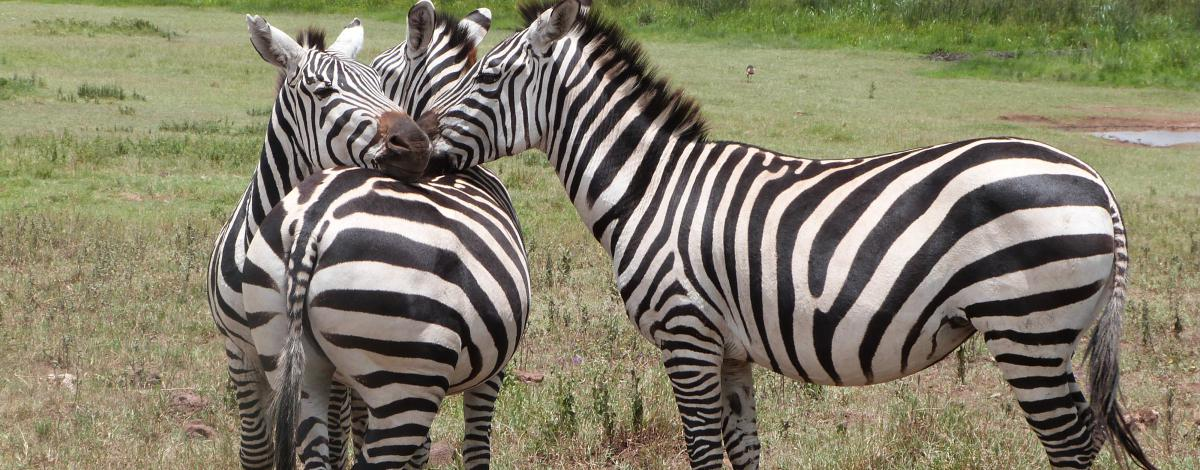 Voyage en Tanzanie: Safari magique en famille version charme