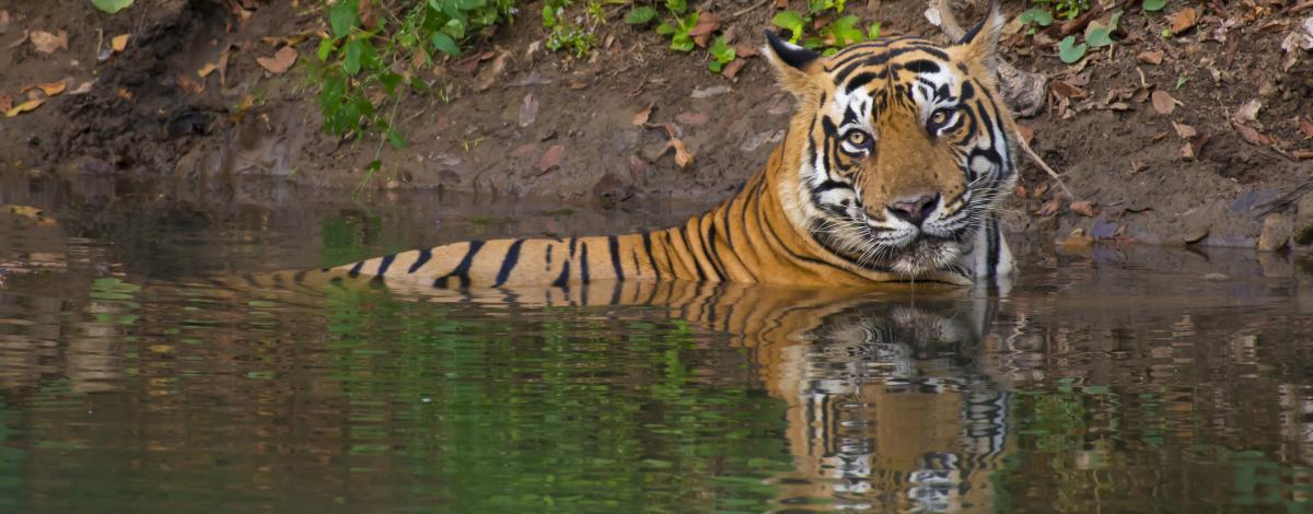 Sur la piste des tigres jusqu'à Kajuraho